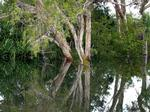 Example of billabong on major wetlands